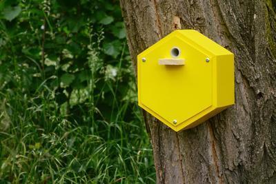 Dárková sada s Originálním čmelínem (pětidílná), Dijon - žlutá - 1