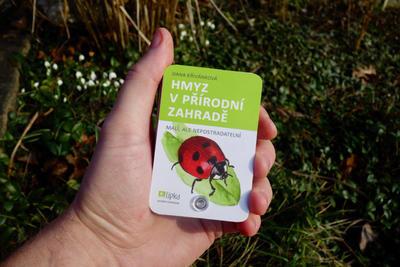 Hmyz v přírodní zahradě - 1