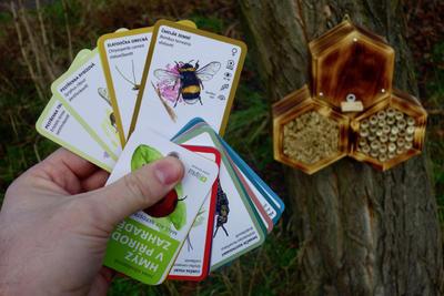 Hmyz v přírodní zahradě - 2