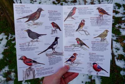 Ptáci na krmítku - 2