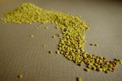 Květový pyl pro čmeláky - 3