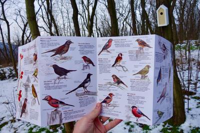 Ptáci na krmítku - 3