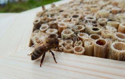 Hmyz v přírodní zahradě - 3