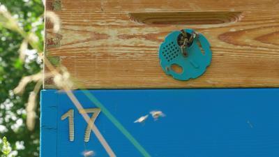Velká svíčka se včelou ze včelího vosku - 4