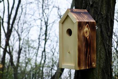 Ptačí budka Emma Prometheus - 4