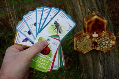 Hmyz v přírodní zahradě - 4