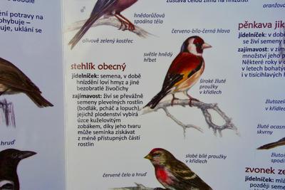 Ptáci na krmítku - 4