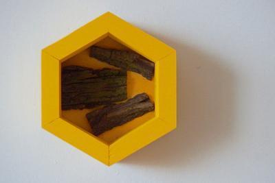 Motýlovník Dijon - 5