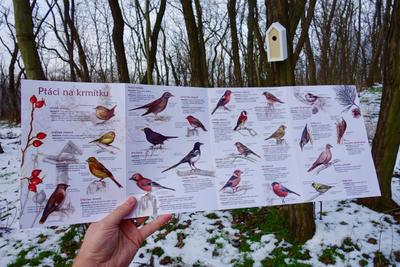 Ptáci na krmítku - 5