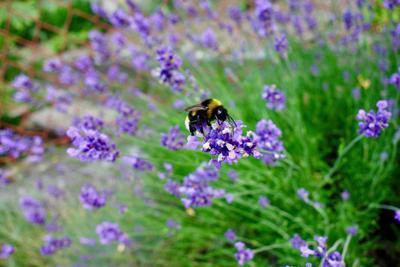 Hmyz v přírodní zahradě - 6