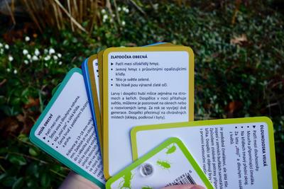 Hmyz v přírodní zahradě - 7