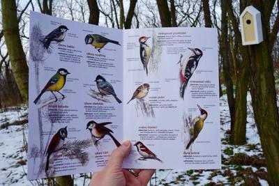 Ptáci na krmítku - 7